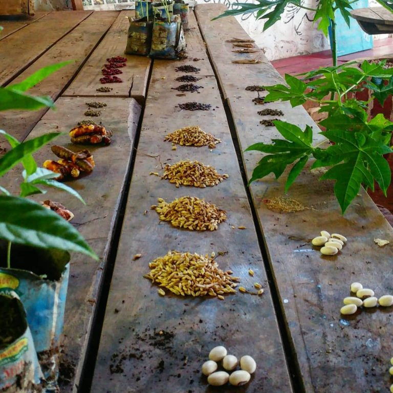 Malawi Schools Permaculture Clubs (MSPPC) Butterfly Space, Malawi, Volunteer